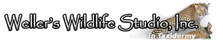 Weller's Wildlife Studio Logo
